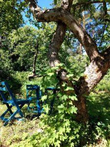 omenapuun-alla
