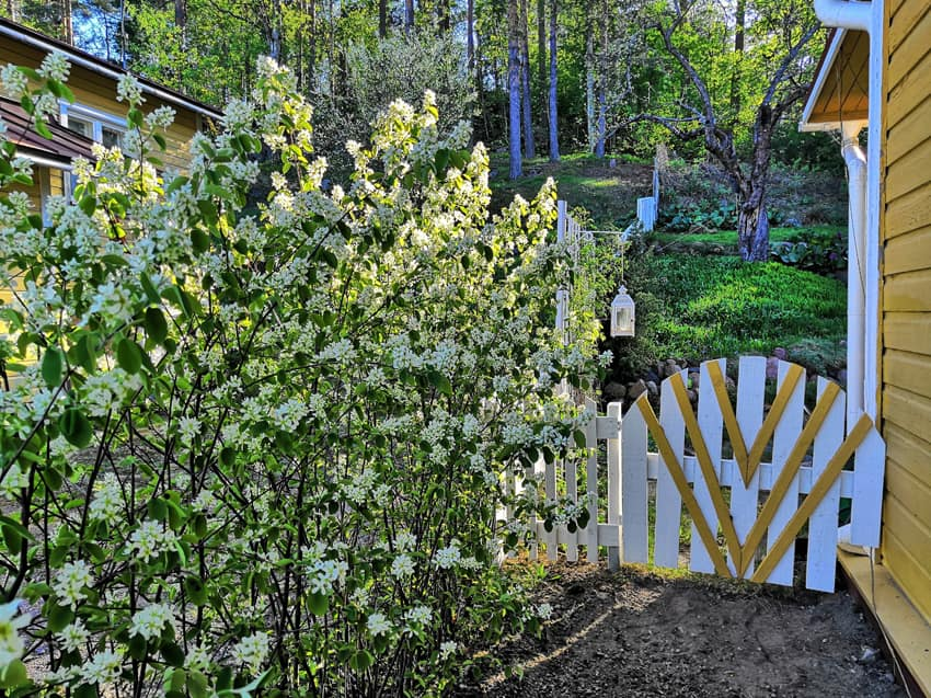 Vanha Puutarhurin piha Loviisan Avoimet puutarhat tapahtumassa