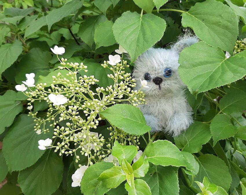Iloa syksyisestä puutarhasta